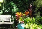 Abbeyard Tropical landscaping 11