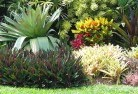 Abbeyard Tropical landscaping 9